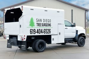 About San Diego Tree Service